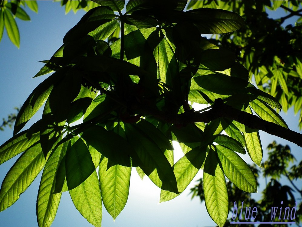 花环绿色树叶素材