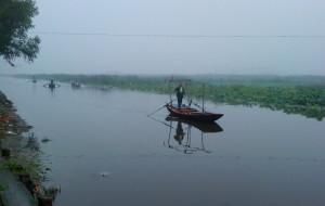 【白洋淀图片】白洋淀,可惜了的湿地(二)