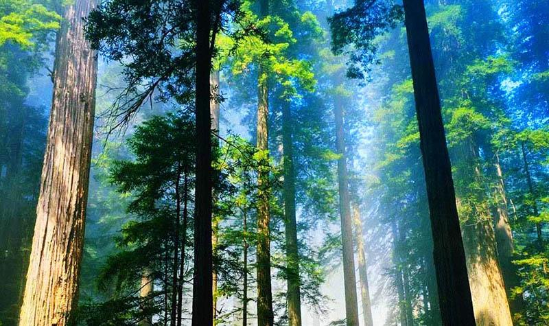 千岛湖森林氧吧门票 清肺之旅