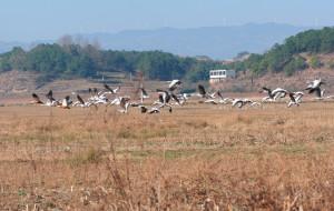 【威宁图片】观鹤之旅-行摄威宁草海