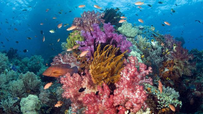 都有哪些海洋之最呢,现在都有哪些珍稀濒危的海洋动物…&hellip