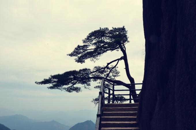 壁纸 风景 树 松 松树 680_450