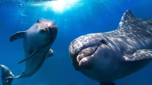 【摩顿岛/海豚岛一日游】澳大利亚布里斯班黄金海岸摩顿海豚岛沉船