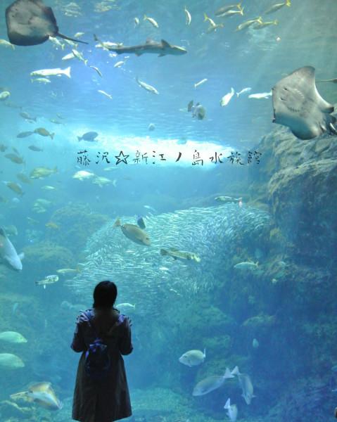 壁纸 海底 海底世界 海洋馆 水族馆 桌面 479_600 竖版 竖屏 手机