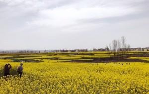 【汉中图片】【王小小的旅途】汉中行(之一)——自驾108国道  穿越秦岭到汉中那花开的地方