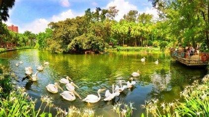 广州广州动物园门票,蚂蜂窝自由行