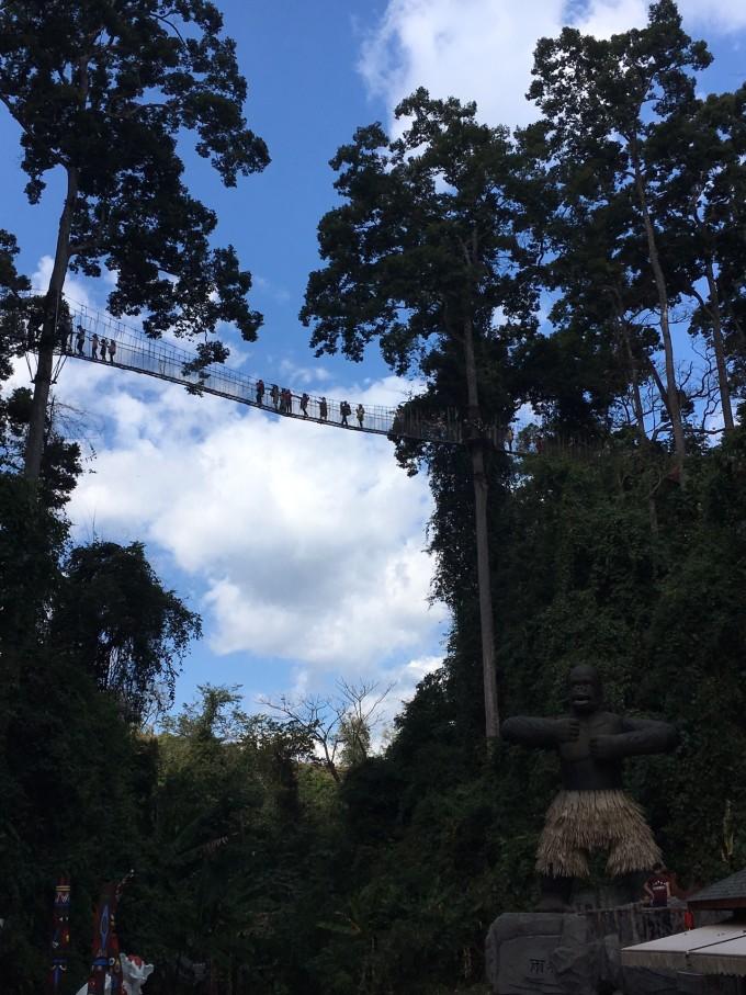 菲利普小道则是为了纪念世界爱护野生动物基金会主席爱丁堡公爵菲利普亲王。1986年,菲利普亲王亲自到西双版纳考证,最终确认了龙脑香科典型树种望天树的存在,回国后,他积极向同事们宣传,并著书立说,向世界证实了北纬21度附近确实存在热带雨林,也使我国成为世界上拥有热带雨林的三大地区之一。