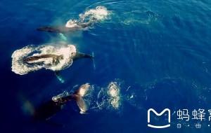 【汤加图片】汤加 - 鲸鱼 - 帆船 – 海洋 - 我的小岛梦!
