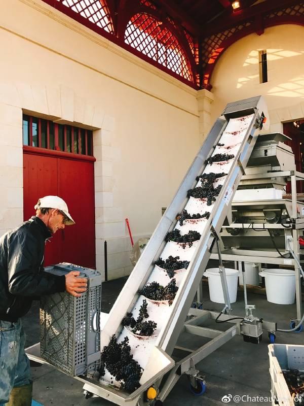 赵薇的法国酒庄不仅奢华,还盛产美酒