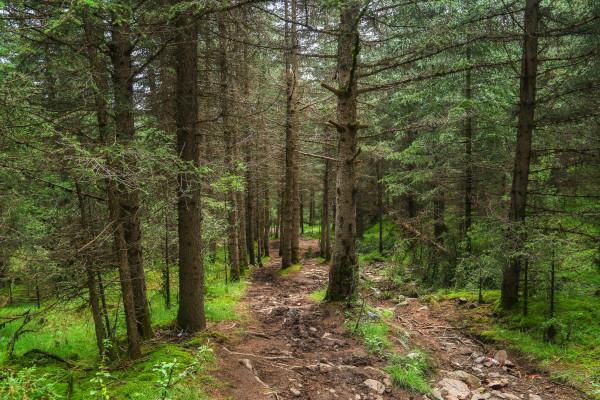 壁纸 风景 森林 树 桌面 600_400