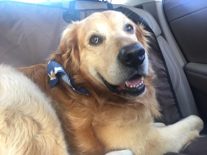 带狗看海手绘矢量图