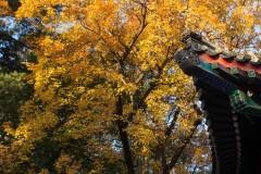 香山--北京的秋色