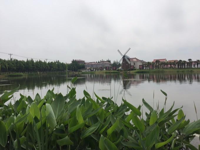 五月骑行横沙岛,上海旅游攻略 - 马蜂窝