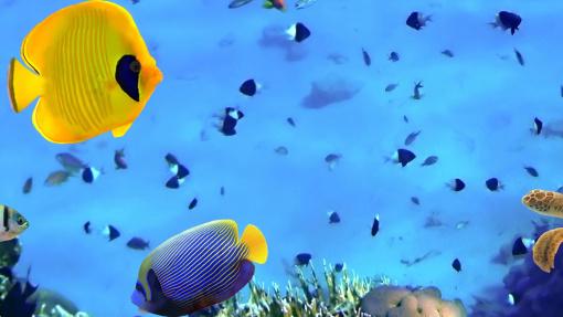 堪比美/新加坡/圣淘沙的【海底世界】:在海底长廊里,各式各样的热带鱼