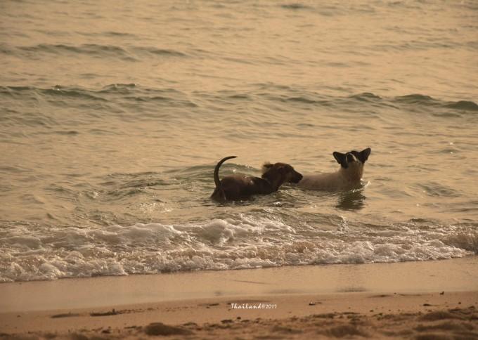 昨天认识的小伙子,推荐的象岛四岛浮潜,原本对我来说没什么吸引力