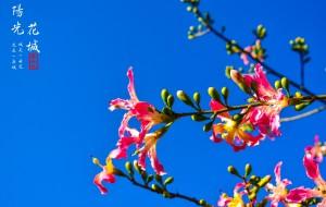【攀枝花图片】秀美川西南,邂逅花城最美的冬日暖阳