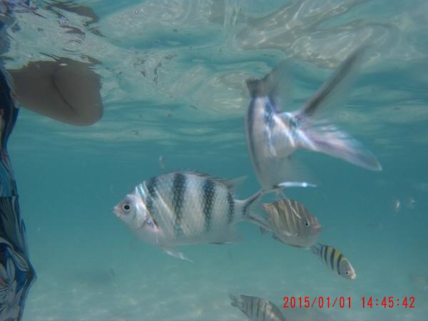 一定也不亚于普吉岛的皇帝岛,水清天蓝,游泳的时候各种小鱼在你身边