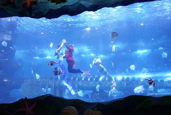 五彩小丑的逗趣搞笑 美人鱼海豚表演 曲江海洋极地公园春节欢乐多图片