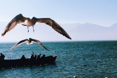 17圣诞云南行——丽江--大理--泸沽湖(纯文字,图片未整理,未完……)