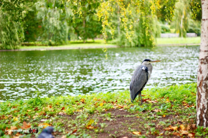 park,公园尽头是白金汉宫,对唐宁街和白金汉宫完全无感,喜欢动物园