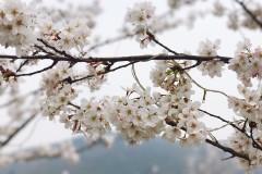 三月踏青~ 灵山小镇……拈花湾的小美好