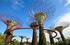 新加坡滨海湾花园花穹和云雾林双园门票(快速兑票+无需等待+即订即用)