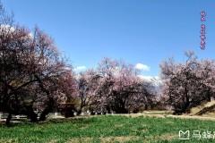 坐上班车游西藏:领略西藏美景,从三月林芝开始!