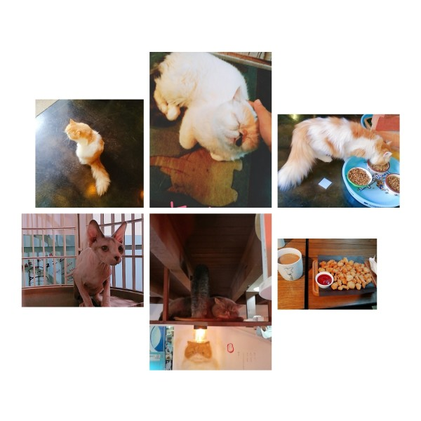 一笔画完咖菲猫-猫咖叫摩卡奶茶   店面很不起眼,在   重庆   道上   但素,里面简直是加