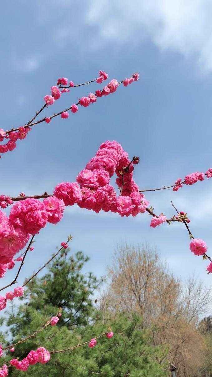 北京的春天