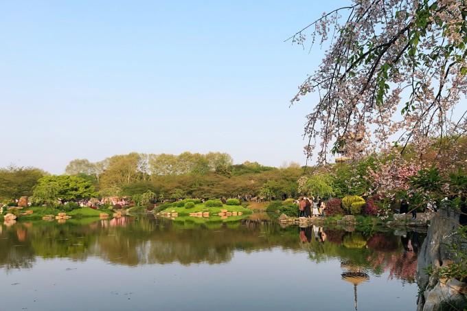 东湖磨山景区东湖樱花园