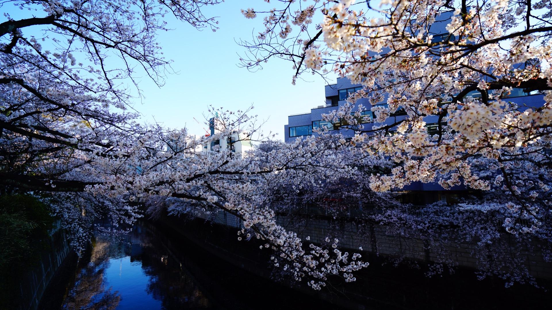 樱花与富士之旅——又见日本