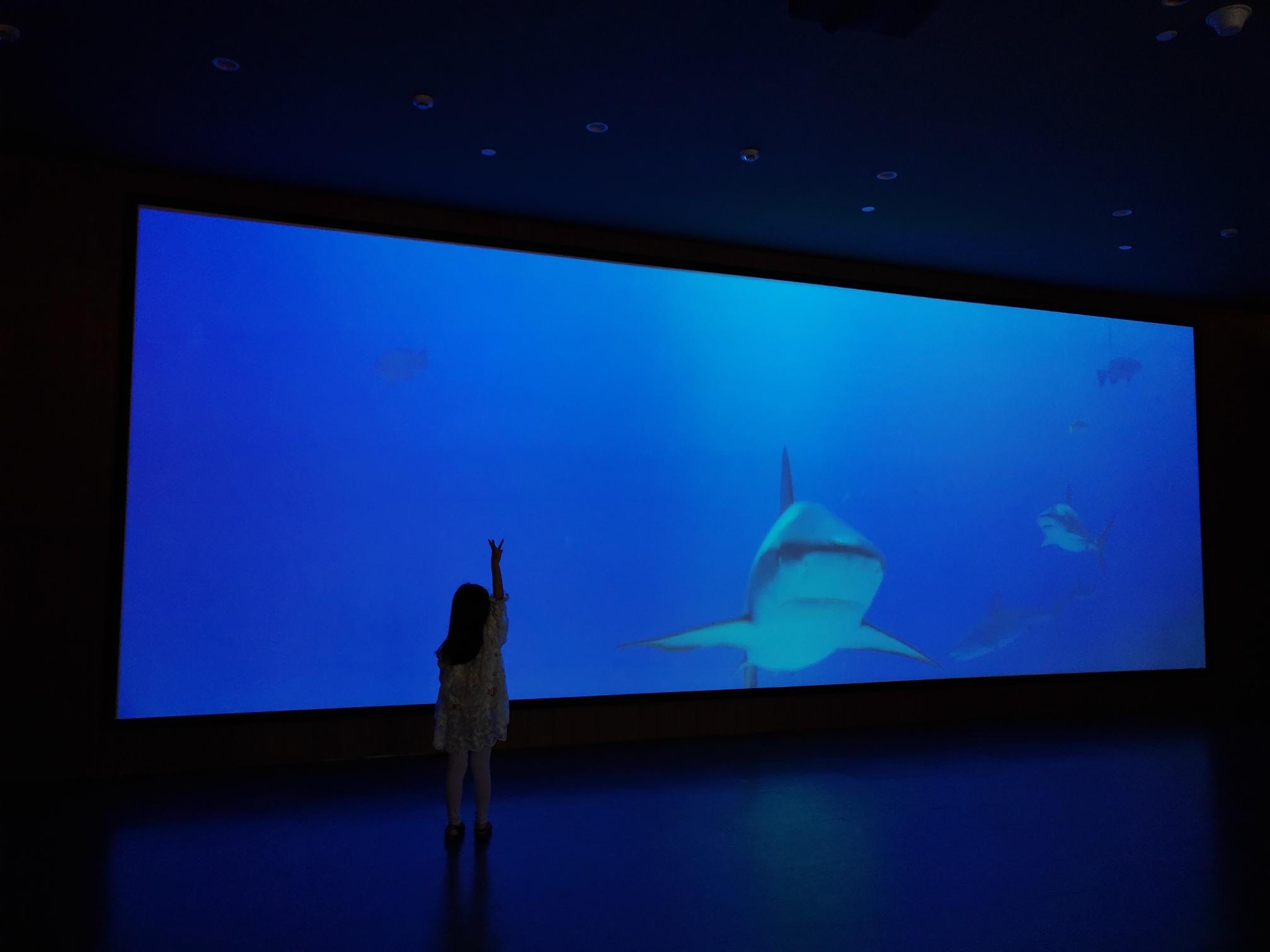 (魅力四射)暑期亲子好去处(魅力四射)国家海洋博物馆
