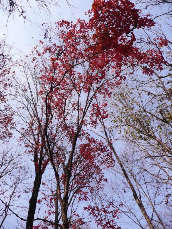 吉林市舒兰红叶谷图片