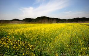 【江西图片】走在乡间的小路上--骑行美丽的婺源