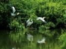 富锦国家湿地公园