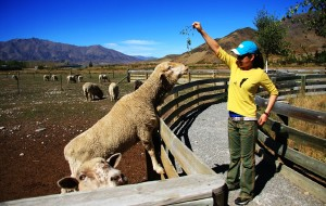 """【新西兰图片】(完整版)新西兰南北岛14日自驾-纯净""""新鲜蓝""""的旅行日志"""