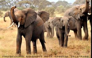 【肯尼亚图片】猎游肯尼亚-----90天的准备,8天的旅行,60天的整理,游记新鲜出炉!