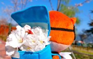 【釜山图片】泡菜味櫻花觀賞方案