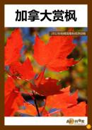 加拿大赏枫