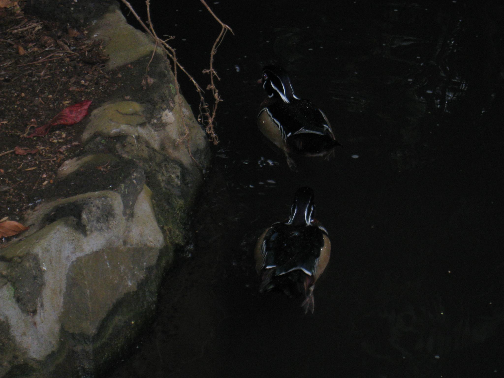 黑色猫的背影手绘图片