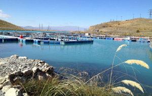 新西兰美食-三文鱼农场