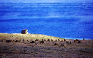 【新疆图片】【在北疆的整十天】