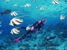 青岛梦幻海洋潜水世界