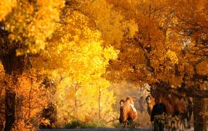【巴丹吉林图片】塞外秋风催叶黄,大漠深处又夕阳(胡杨、大漠的回忆:播放中)