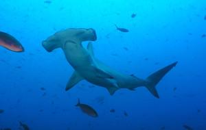 【厄瓜多尔图片】加拉帕戈斯群岛8-9月潜水季