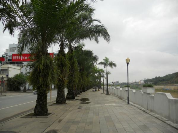 不一样的越南行 河内 下龙湾 吉婆岛 沙巴图片