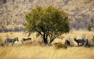 【南非图片】南非--原始的神秘与现代的奢华