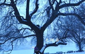 【沈阳图片】南方姑娘的北方梦。哈尔滨,雪乡,延吉,吉林,雾凇岛,长春,沈阳。完。