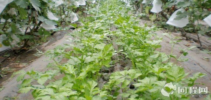 香坊试验农场第二园区采摘园