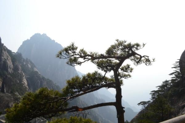 冬季的黄山美景 2014年2月